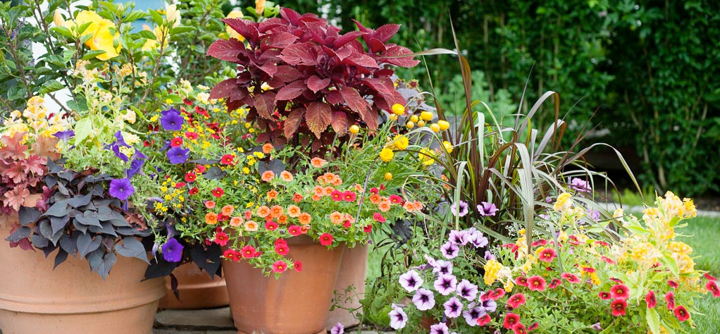 Working Earth Window Boxes and containers